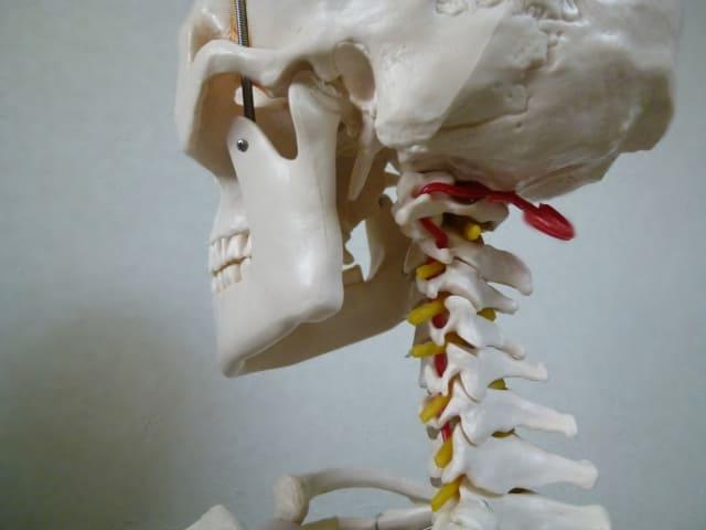 首こり,頚椎,
